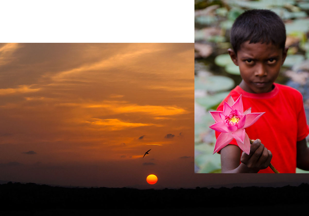 The ideal color of a padparadscha has been described by some as the marriage between a lotus flower and a sunset, each shown above in Sri Lanka.
