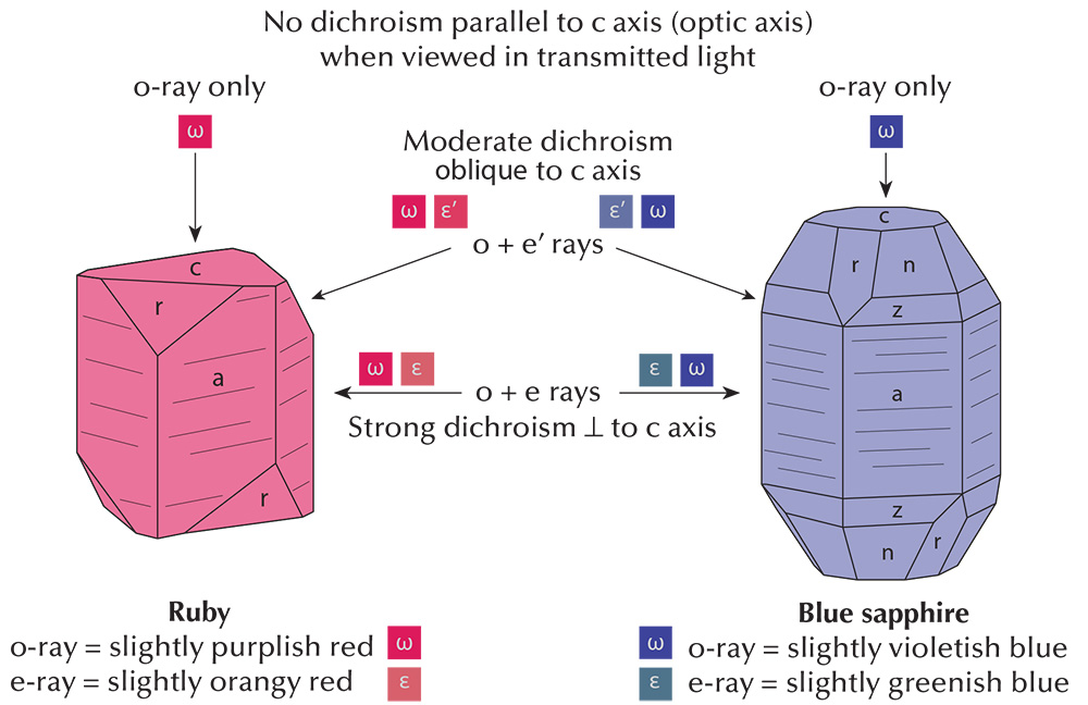 Figure 3. Pleochroism in uniaxial crystals as viewed with the dichroscope, using the example of ruby and sapphire. Illustration: Richard W. Hughes