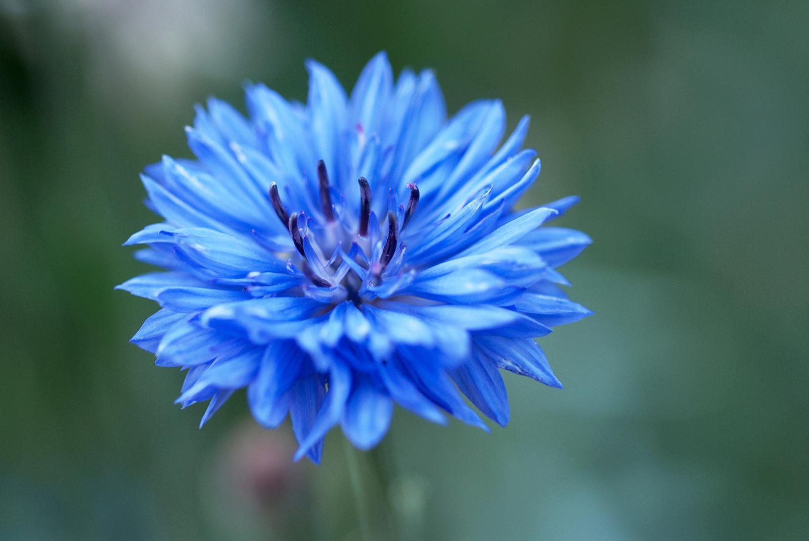 Color types cornflower izmirmasajfo