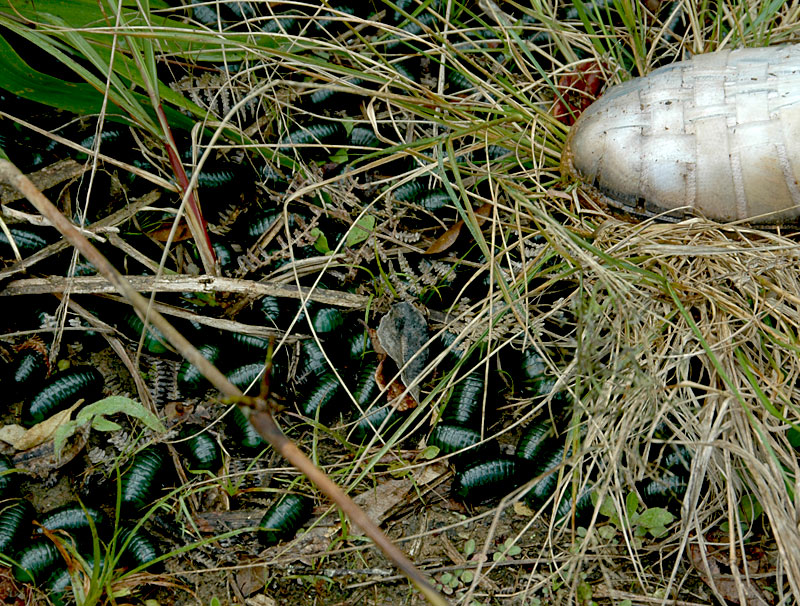 Large creepy-crawlies on the trail to Andrebabe. Photo: Richard W. Hughes