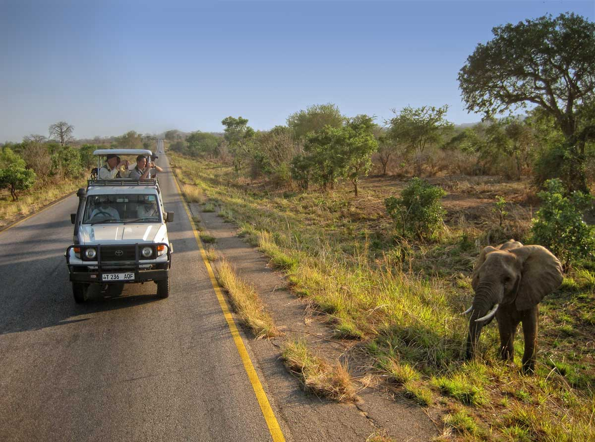 An elephant in the Mikumi National Park, along the road to Mahenge. Photo: Michael Rogers