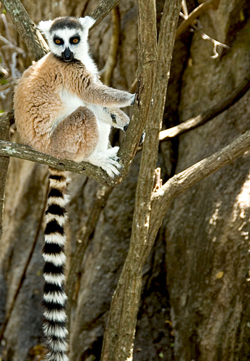 Madagascar is a wildlife wonderland, as the photo of the lemur above shows. Photo: Richard W. Hughes