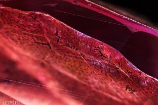 This synthetic pink sapphire was fractured and then appeared to have been soaked in an iron-rich solution to created orange stains in the fissures, thus simulating padparadscha. The stains developed unusual dendritic patterns, as seen here. Chemical analysis also reveal traces of lead in the fissures. In this image we can also see fine growth needles in parallel lines.