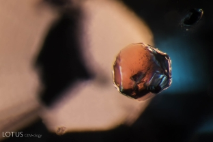 A striking orange crystal stands out from its sapphire host. When we analyzed this crystal with Raman microscopy, we were able to identify it as a garnet. Garnet is a known inclusion in Tanzanian sapphire like this one.